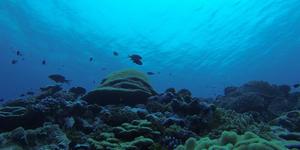 Coral reef. Susan White, USFWS CC BY-NC 2.0
