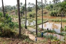 Community fish-farming ponds in the rural town of Masi Manimba, DRC